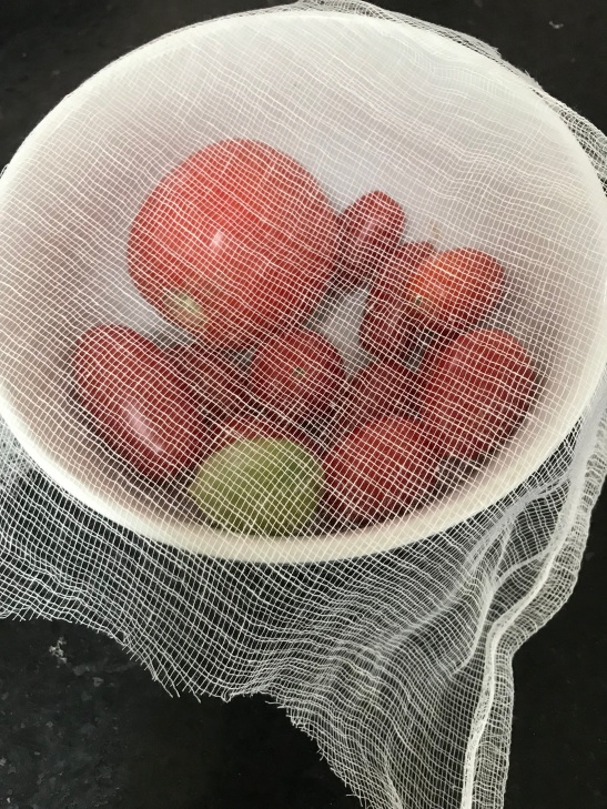 Fruit Fly solution.jpg